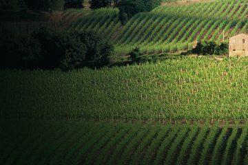 umani_ronchi_masters_of_wine_vigneti